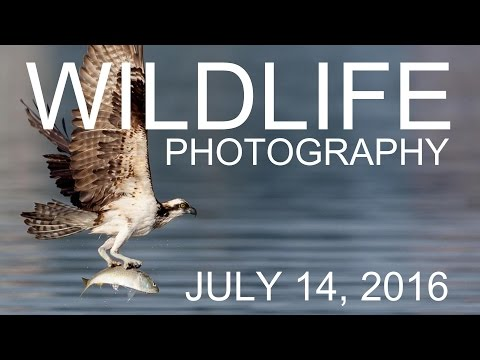 Wildlife Photography & New Sony Lenses - Tony & Chelsea LIVE