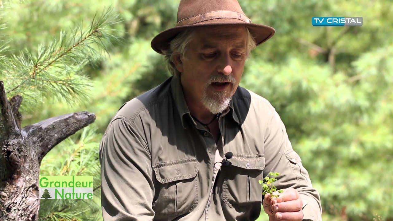 Les plantes sauvages comestibles - CEN Lorraine - YouTube