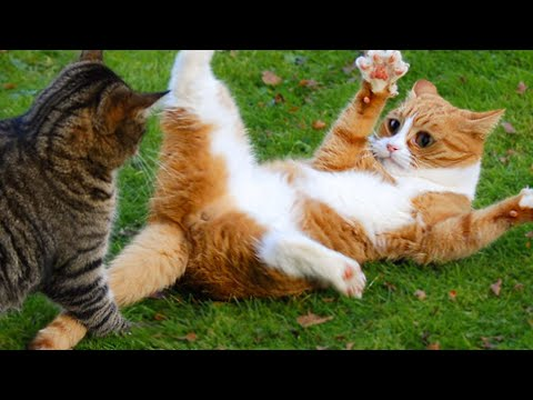 Funniest  Dogs and  Cats  Awesome Funny Home Animal Videos