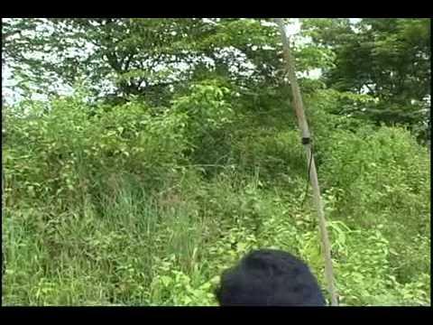 Tutorial penangkapan burung liar.flv