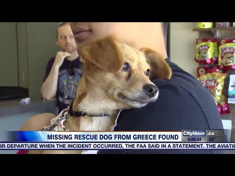 Rescue dog found safe after bolting at Pearson airport