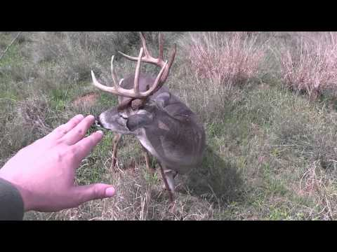 Hunter Stalks & Touches Nice Buck