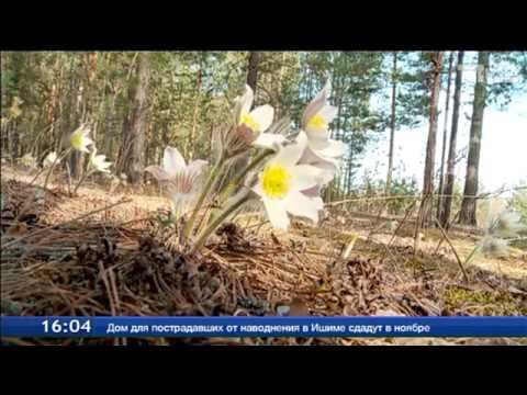 Видео Красная книга растения картинки