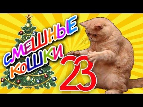 Смешные кошки 23 ● Коты против Ёлок – Приколы с животными 2015 ● Funny cats vine compilation