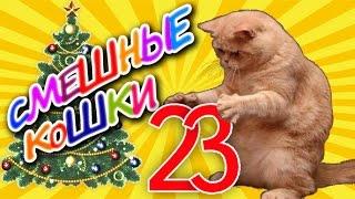 Смешные кошки 23 ● Коты против Ёлок - Приколы с животными 2015 ● Funny cats vine compilation
