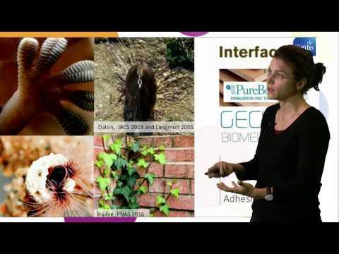 Biomimétisme : Enjeux et opportunités