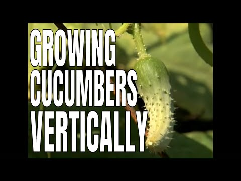 1-2-3 Done! - Building a Cucumber Trellis<a href='/yt-w/0AA8ExkvdHo/1-2-3-done-building-a-cucumber-trellis.html' target='_blank' title='Play' onclick='reloadPage();'>   <span class='button' style='color: #fff'> Watch Video</a></span>