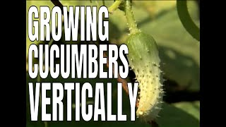 1-2-3 Done! - Building A Cucumber Trellis