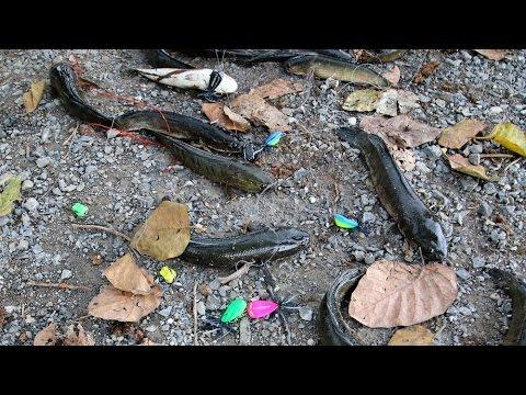 ถล่มฝูงปลาช่อนนา ที่สุพรรณ  FISHINGEZ