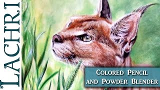 Colored Pencil Caracal drawing tutorial w/ Powder Blender - Lachri