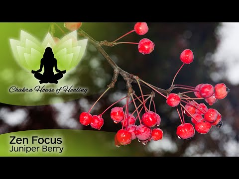 essential-oils-juniper-berry-benefits---zen-focus