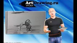 Рисование животных и птиц - видео курс