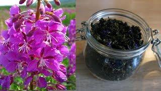 🍀 ИВАН ЧАЙ - Подробный рецепт - заготовка, ферментация и сушка  🍀