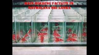 Aquarium Fish Exporter