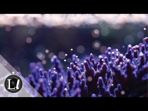 Project Coral | Jamie Craggs