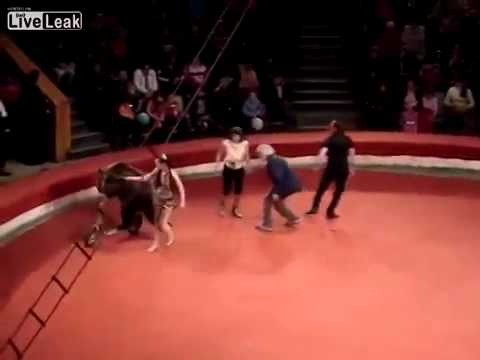 FULL Circus Bear Attacks Handler, then Calms Down and Rides Scooter