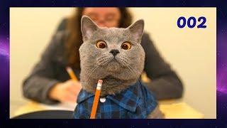 ПОДБОРКА СМЕШНЫХ ВИДЕО С КОТАМИ 002 Смешные кошки Funny Cats