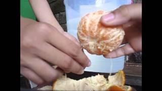 Hukum Archimedes : Melayang dan tenggelam pada jeruk