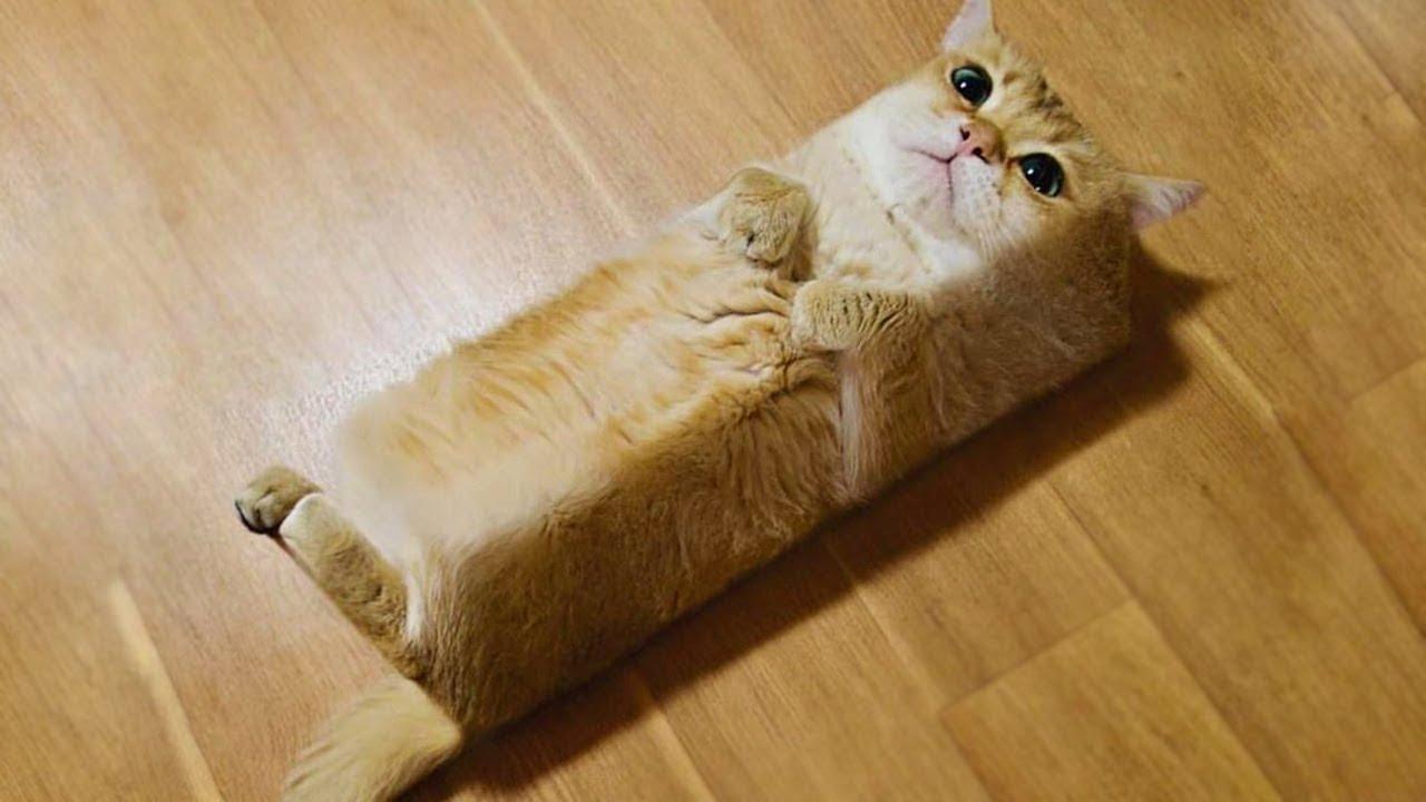 かわいい猫」 笑わないようにし...