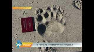 Ищут специалистов, чтобы отловить медведей на Ольхоне