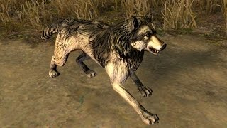 Path of Exile - Wolf Pet