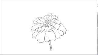 How to Draw a Marigold flower
