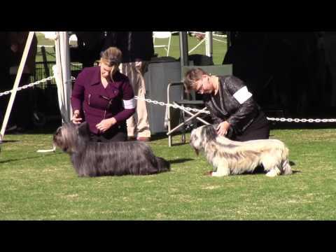 Palm Springs Kennel Clug Dog Show 1-9-16 Skye Terriers