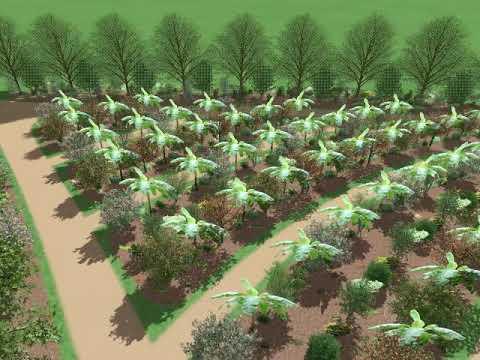 3 acre Food Forest - conceptual design (Labelle, FL)
