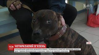 У Сумах поліцейським довелося визволяти собаку, якого зачинили в квартирі