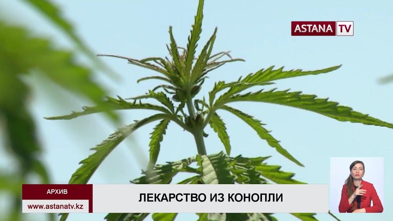 Закон казахстана о марихуане какие болезни есть у марихуаны