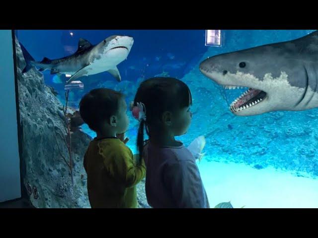 FUNNY VINE//Акулы в океанариуме VLOG