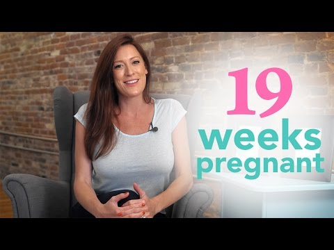 Week 19 of the Pregnancy