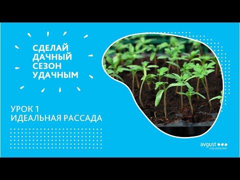 Удачный сезон. Как правильно вырастить рассаду? Почему рассада вытягивается?