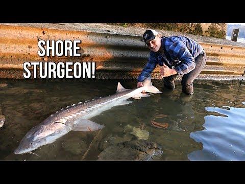 SHORE FISHING For STURGEON!