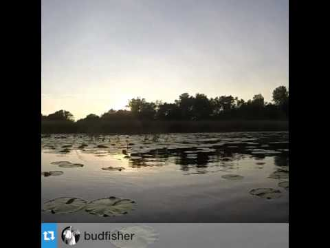Bud Fisher Fishing Show