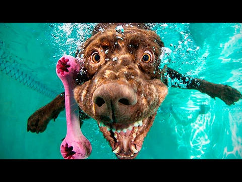 Funny Dogs 2017 🐶 😂 Cute  Dogs Making Funny Faces [Funny Pets]