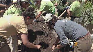 Teen Mentoring Program Will Make The Streets Of LA More Green thumbnail