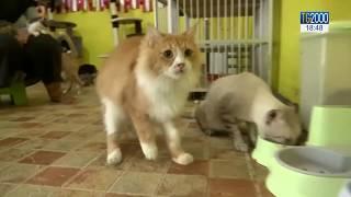 La Giornata Internazionale Del Gatto. Ecco Le Immagini Più Belle E Divertenti