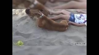 Dog vs girl sex