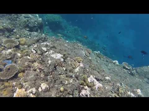 Snorkeling at Sub-base