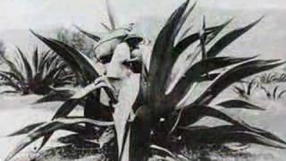 Agave / El Pulque / (Los Xochimilcas ♫  Danzón Mexicano)