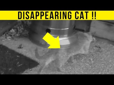 Thumbnail: 5 Animal Teleportations Caught On Camera & Spotted In Real Life!