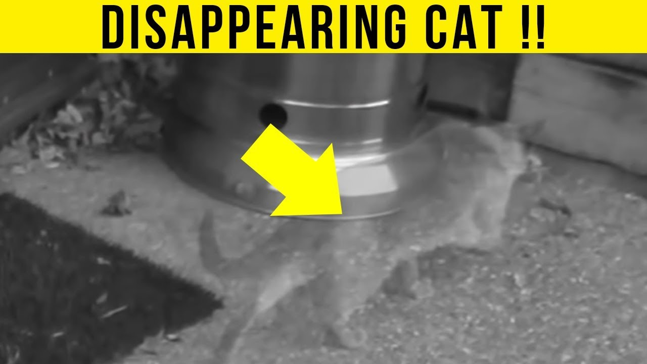5-animal-teleportations-caught-on-camera-spotted-in-real-life