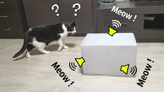 Meow from the Box. Cat's Reaction