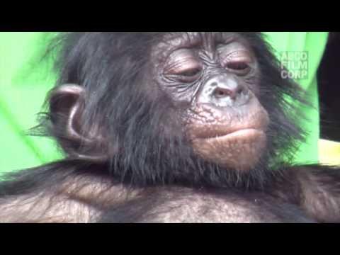 Bonobo Baby 2