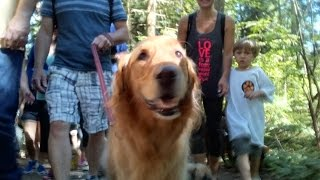 Paws For A Cause 2015, Surrey, Bc