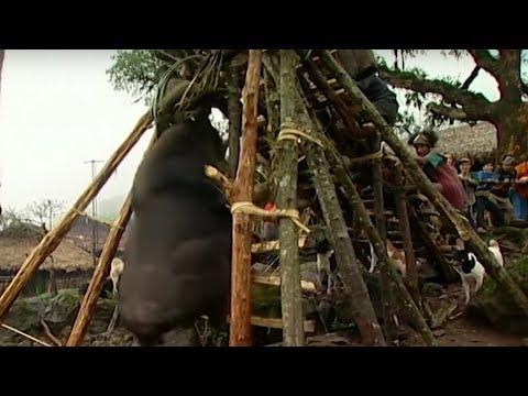 Sacrificing The Mythun   Tribe   Earth Unplugged