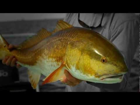 Panama City Beach  And Destin Fly Fishing