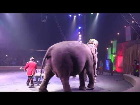 Прикол Слон какает и писает в цирке