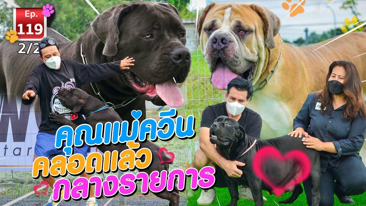 คลอดกลางรายการ!! หนึ่งเดียวในเมืองไทย ASIA BIG DOG - เพื่อนรักสัตว์เอ้ย EP.119 [2/2]